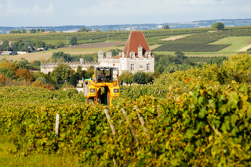 cognac-harvest-bourg
