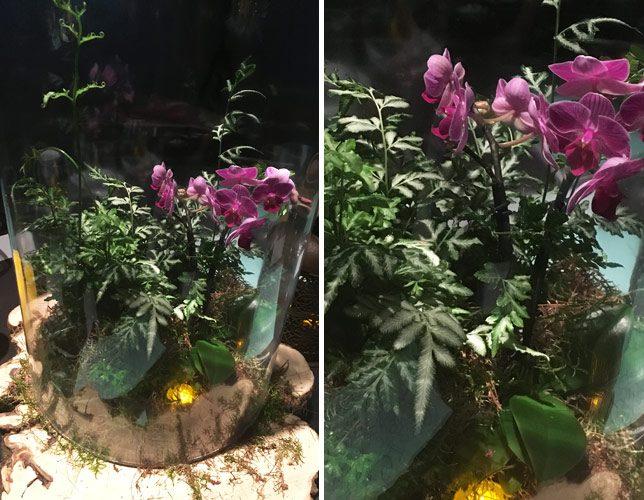iphone6-pics-zoom