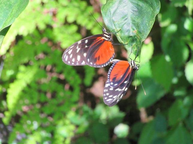 Jardins de papillons