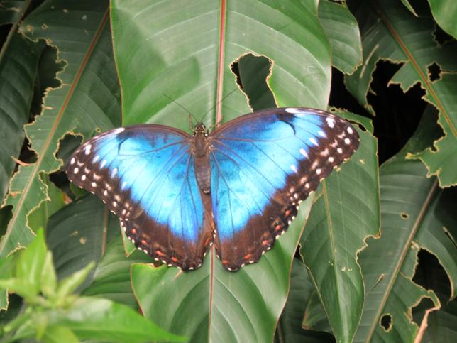 jardins des papillons3